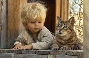 psicologia felina