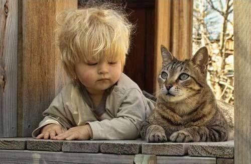 Aprendendo com a psicologia felina