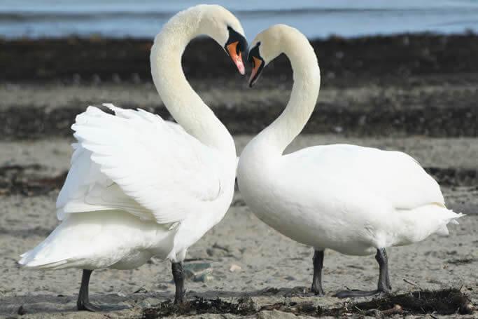 Construindo uma relação amorosa duradoura