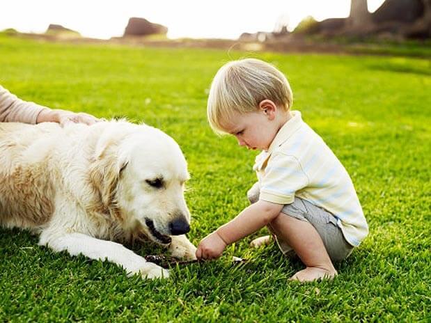 Cão o melhor amigo