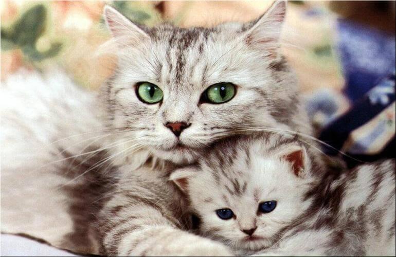 Os 10 mandamentos de um gato para ser feliz