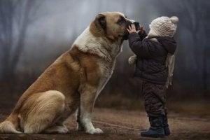 Presentes que recebemos dos nossos cães