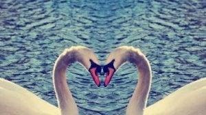 o amor nunca é desperdiçado