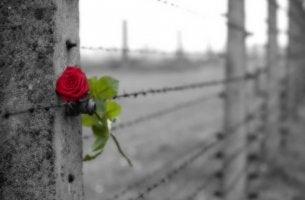 A força e os limites do amor