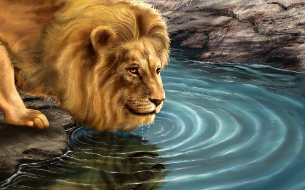 A história do leão e de seu reflexo