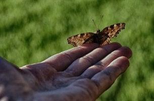 A história do homem e da borboleta nos mostra o que não devemos fazer pelos outros