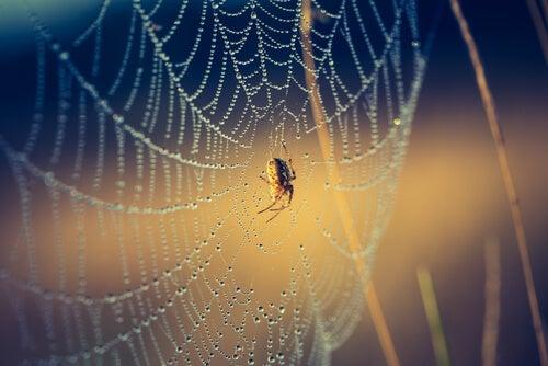 Crescimento pessoal: 6 patas da minha aranha