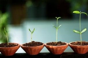 Crescimento emocional