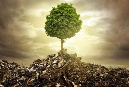 crescer-com-as-adversidades