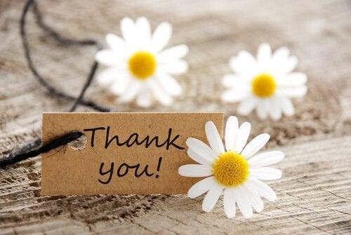 Gratidão para ser mais feliz