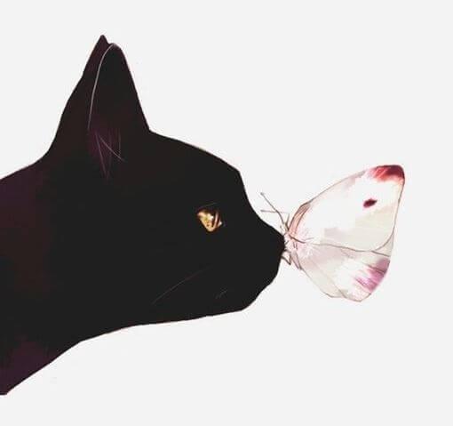 gato-beleza