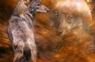 Lobo representando a beleza