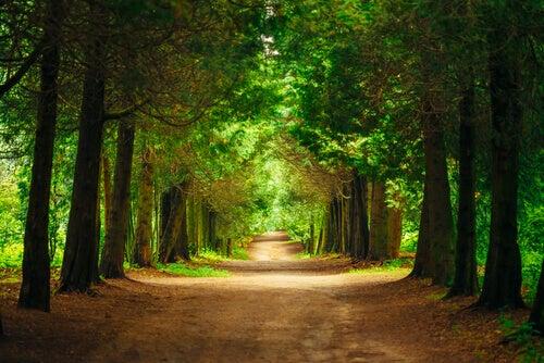 Caminho com árvores