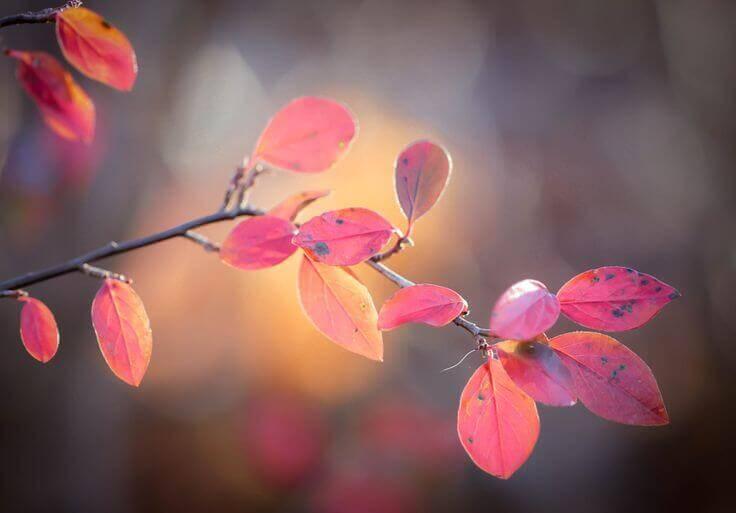 Folhas de outono representando a mudança