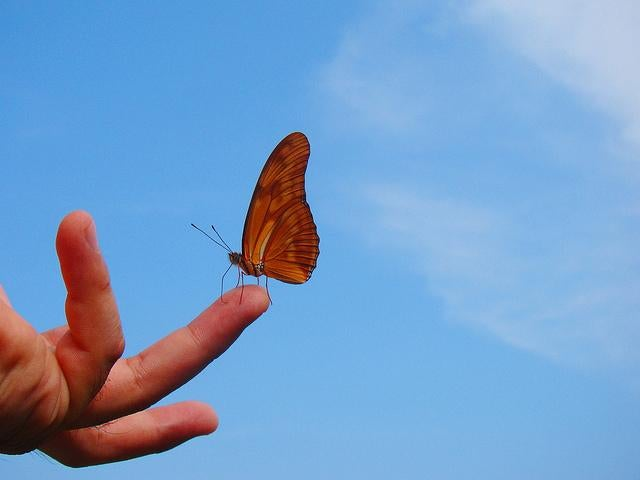 borboleta-na-ponta-do-dedo-representando-filosofia-zen