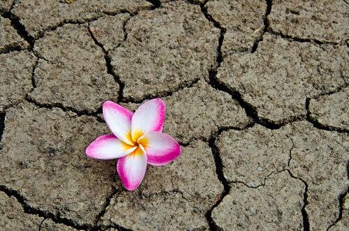 flor-terra-seca
