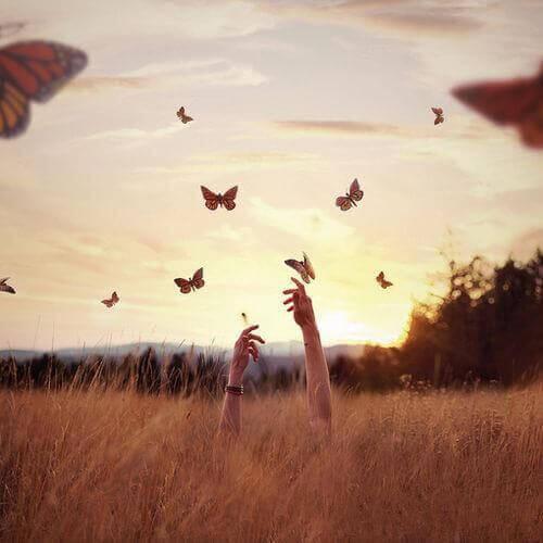 maos-tentando-pegar-borboletas-no-campo