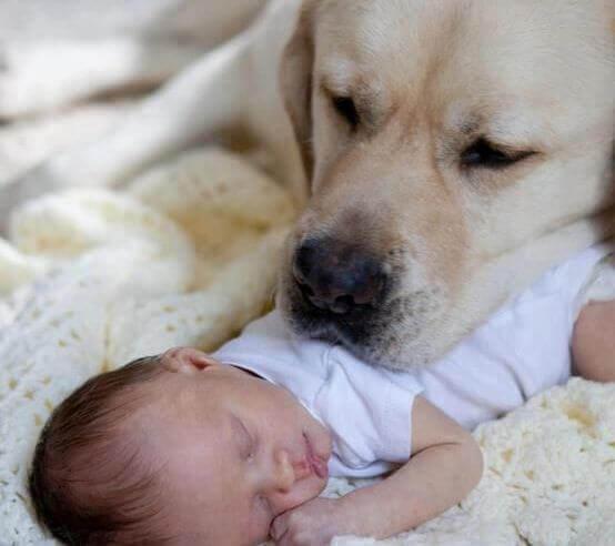 Cão com um bebê
