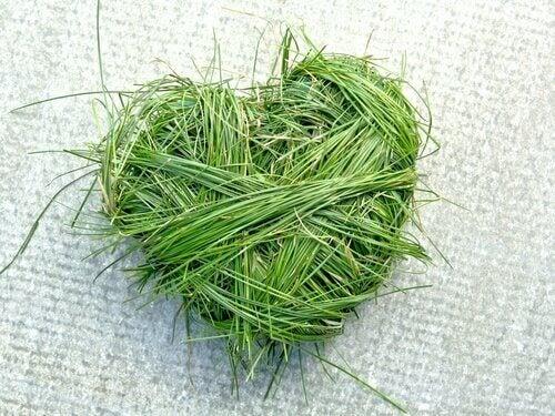 coração-de-ervas