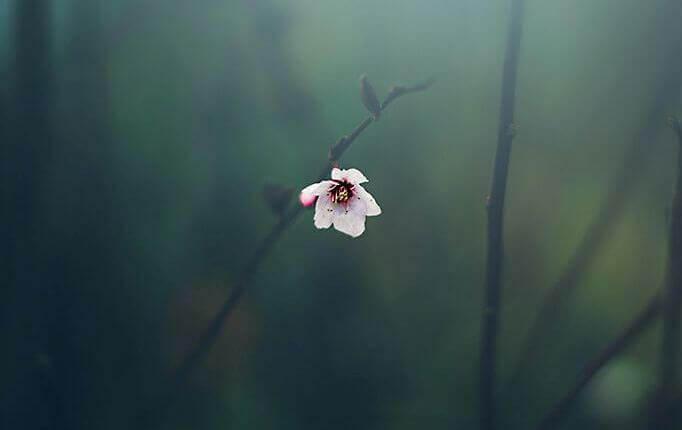 flor-representando-a-resiliencia