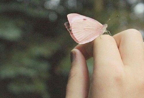 dedos-inseto