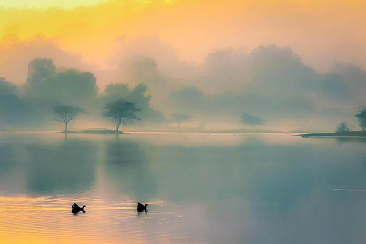 lago-com-patos