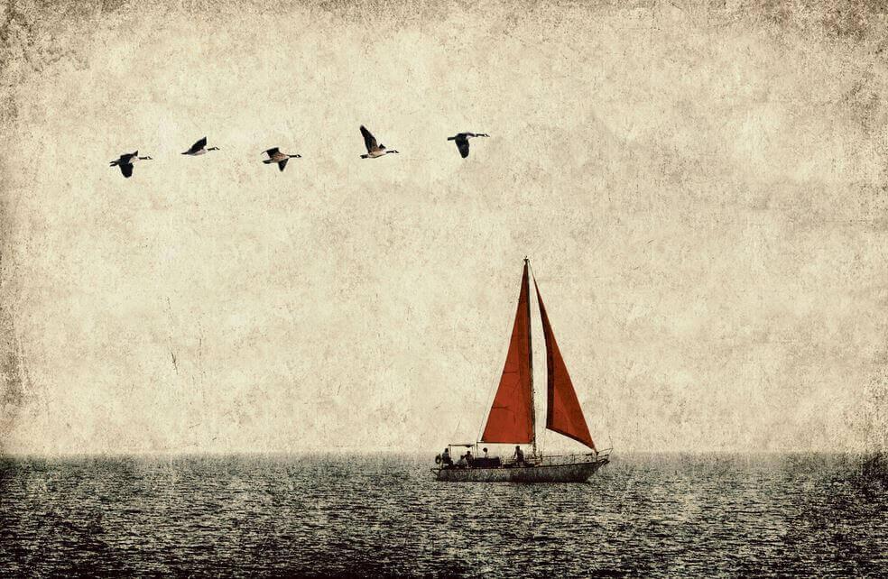 veleiro-passaros