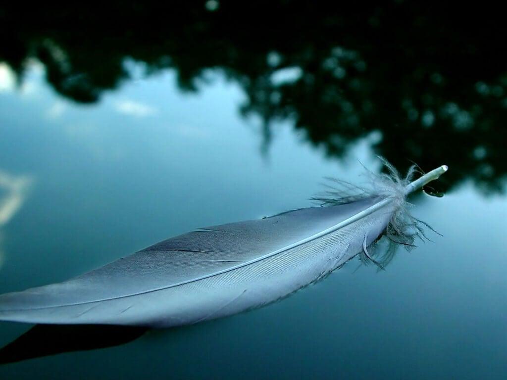 pena-em-lago