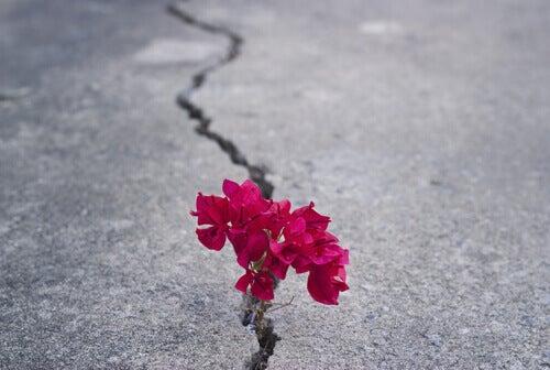flor-crescendo-superando-problemas
