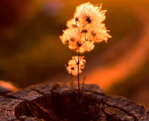 Planta no interior de um tronco