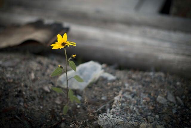 flor-nascendo-em-meio-a-adversidade