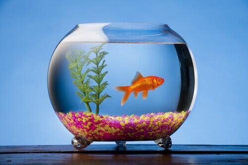 Peixe-preso-em-um-aquário