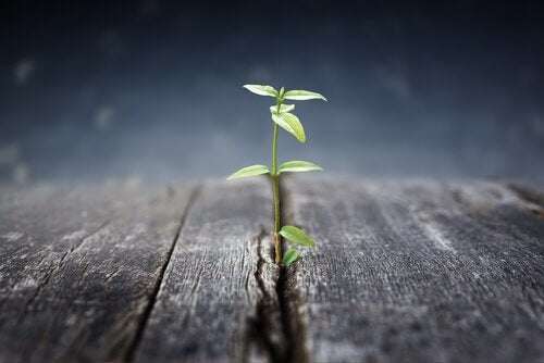 planta-crescendo-adversidade