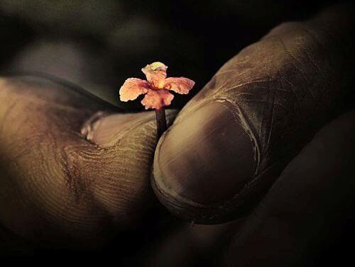 dedos-velhos-segurando-flor