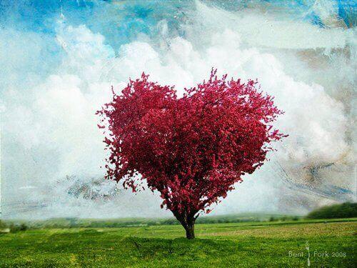 Árvore-em-formade-coração-e-de-cor-rosa