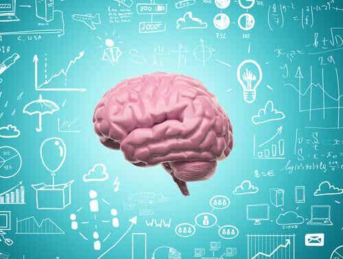 Neuroplasticidade: graças a ela nunca deixamos de aprender