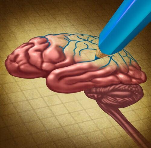 Lápis desenhando um cérebro