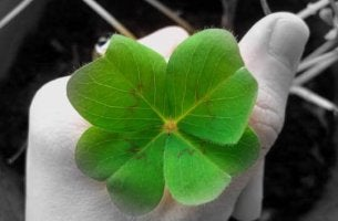 Como atrair a sorte