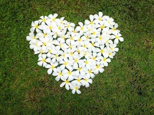 coração-flores