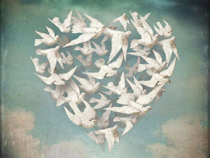 pombas-brancas-detalhes-da-vida