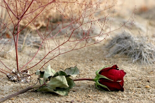 rosa-areia