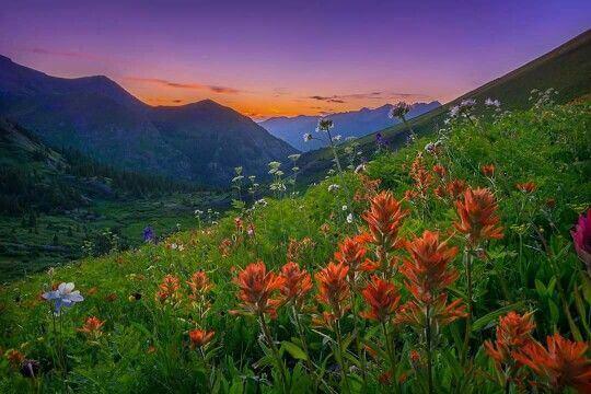 Imagem prado floral