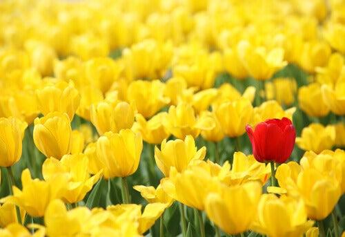 flores-representando-bem-estar-psicológico