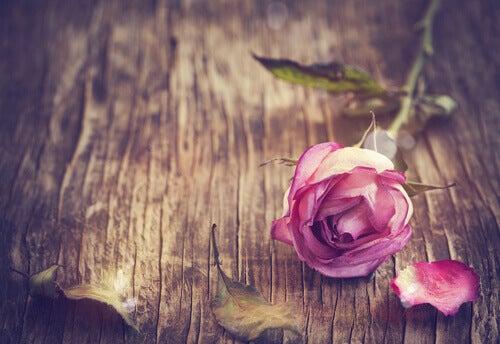 flores-como-podemos-ser-mais-românticos