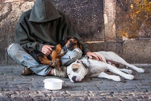 carinho dos animais