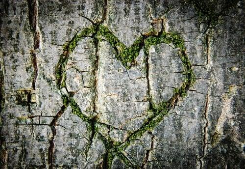 coração-arvore-apaixonar-se
