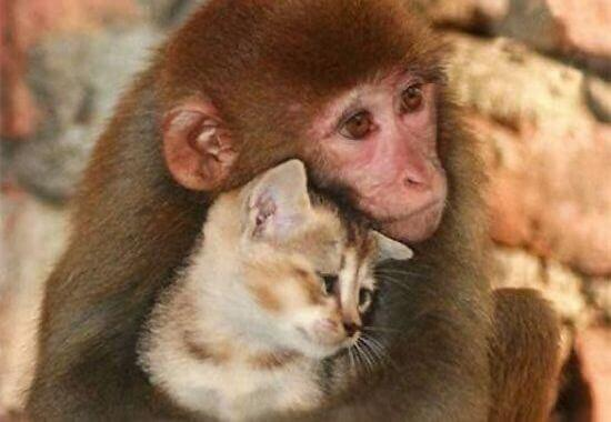 amor-mundo-animal