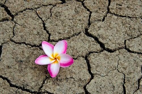 flor-terra-seca-simbolizando-o-fim-do-medo-do-fracasso