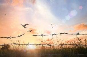 Pássaro voando livre