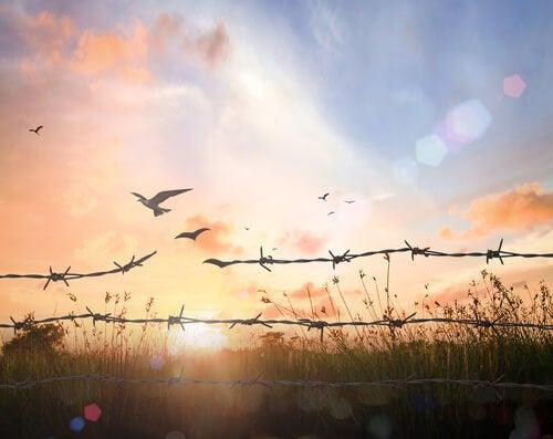 Você é livre, mas não sabe